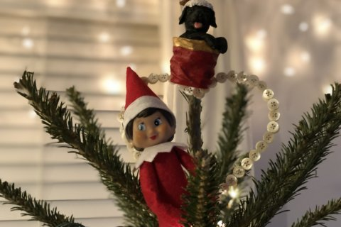 From mischief to magic: Share your Elf on the Shelf adventures