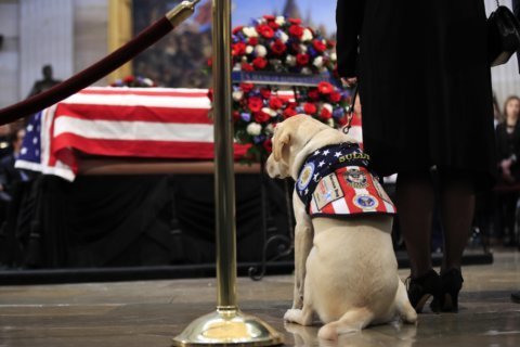 WATCH: Sully the service dog bids farewell to President George HW Bush