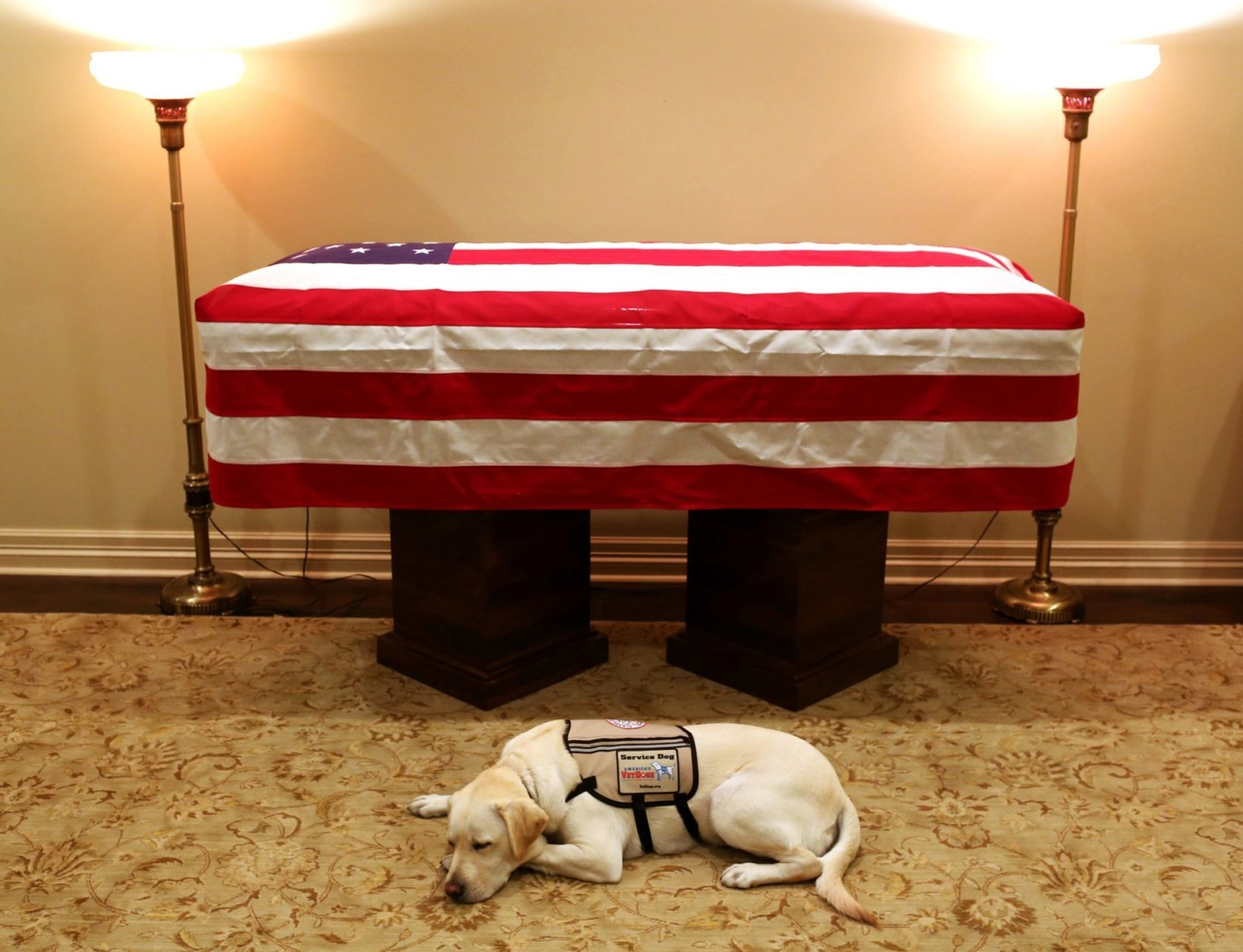 This Sunday, Dec. 2, 2018 photo, Sully, President George H.W. Bush's service dog lies in front of his casket in Houston. The 41st president died Friday at his home in Houston at 94. (Evan Sisley/Office George H.W. Bush via AP)