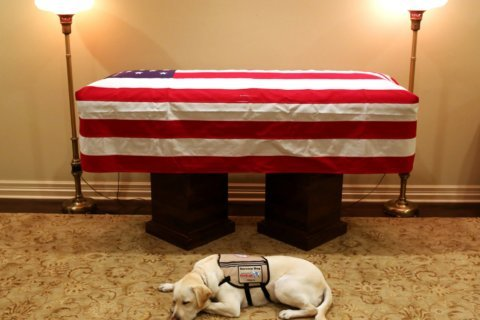 Sully the service dog has new role at Walter Reed