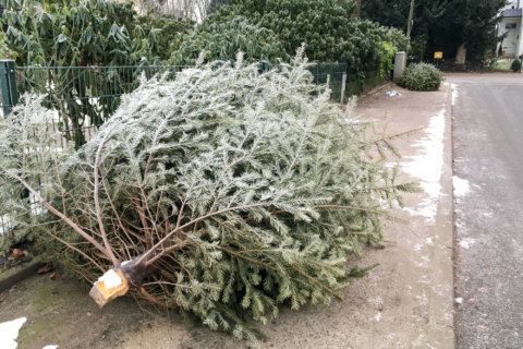 How to limit your landfill load this holiday season