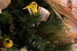 Why are goldfinches in this Christmas tree? Whole the Baltimore Oriole may be Maryland's state bird, the bird of Howard County is the goldfinch. This tree is on view at Maryland's State House in Annapolis, as part of a display of trees decorated by garden clubs across the state. (WTOP/Kate Ryan)