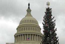 The Capitol Christmas tree is seen outside of The U.S. Capitol in Washington, Friday, Dec. 21, 2018. Republican-led House approved funding for President Donald Trump's border wall in legislation that pushes the government closer to a partial government shutdown. The bill now goes to the Senate. (AP Photo/Jose Luis Magana)