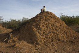 American botanist Roy Funch sits on top of a giant termite mound near Palmeiras, Brazil, on Saturday, Nov. 24, 2018. In Brazil's rugged northeast, termites built millions of mounds that remained hidden in plain sight until a chance meeting with Bunch an insect expert led to remarkable discoveries. More than 200 million mounds stretch across an area the size of Great Britain. Testing found that some of the dirt heaps are nearly 4,000 years old. (AP Photo/Victor R. Caivano)