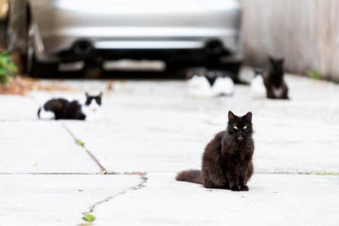 Virginia intersection overrun with cats, deemed a 'hazard'