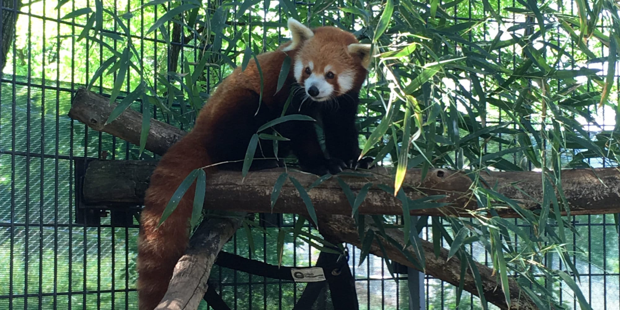 National Zoo Announces Unexpected Death Of 4 Year Old Red
