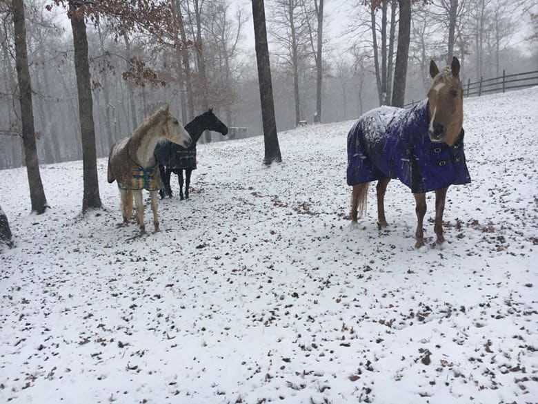 Kelly Dorsey Noe sent in this photo of her horses in southern Fauquier County. (Kelly Dorsey Noe via Twitter)