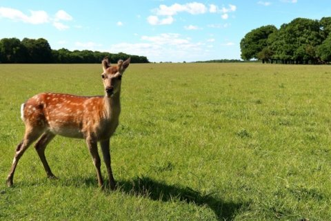 Judge orders poacher who helped kill hundreds of deer to watch 'Bambi' repeatedly while in jail