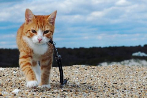 Ocean City's Pip the Beach Cat makes waves with adventures