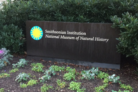 Smithsonian museums, zoo among next shutdown casualties