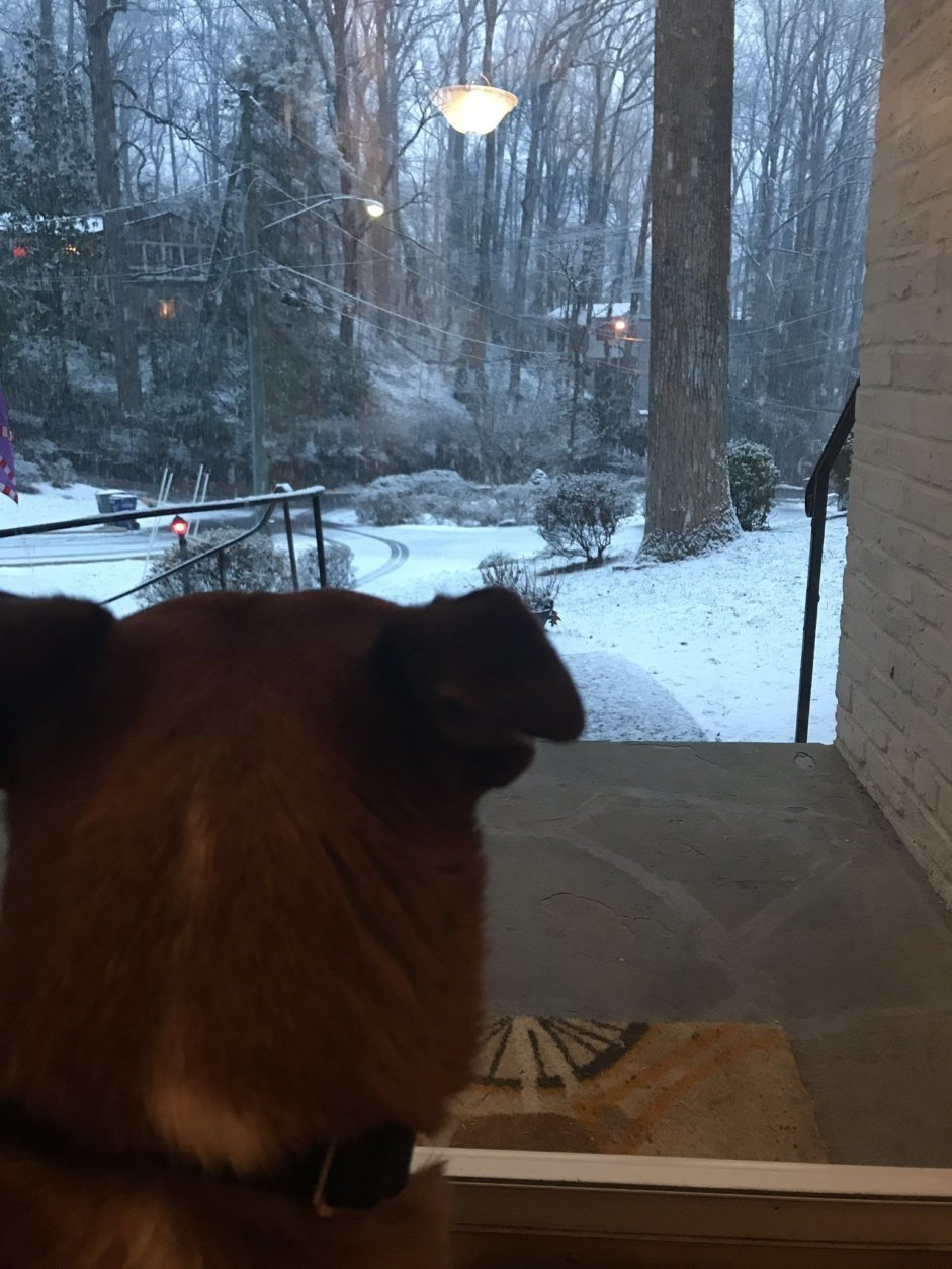 A dog looks out at the snow in Lake Barcroft. (Caroline Powers via Twitter)