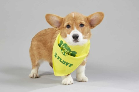Puppy Bowl XV: See the starters for 'Team Ruff' and 'Team Fluff' (photos)