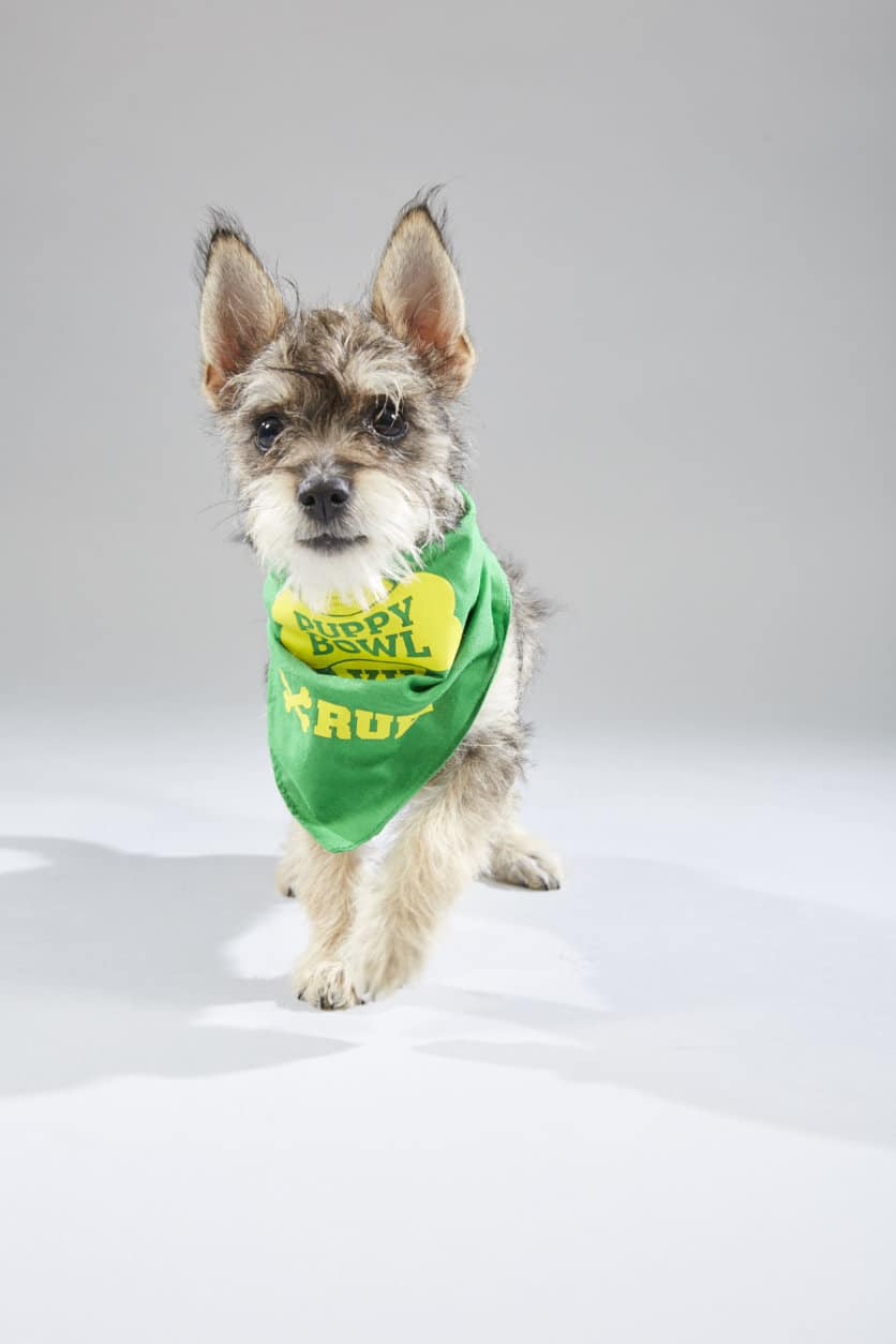 Puppy Bowl XV: See the starters for 'Team Ruff' and 'Team