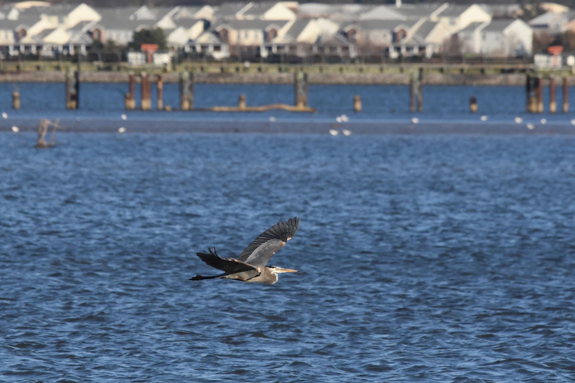 Experts warn against cutting Chesapeake Bay Program funding