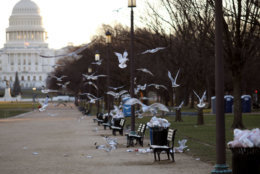 WASHINGTON, DC - DECEMBER 24:  Trash begins to accumulate along the National Mall due to a partial shutdown of the federal government on December 24, 2018 in Washington, DC. The partial shutdown will continue for at least a few more days as lawmakers head home for the holidays as Democrats and the Trump administration cannot agree on an amount of funding for border security. (Photo by Win McNamee/Photo by Win McNamee/Getty Images)