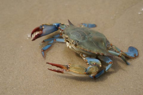 Efforts build to reduce 'ghost' crab pots in Chesapeake Bay