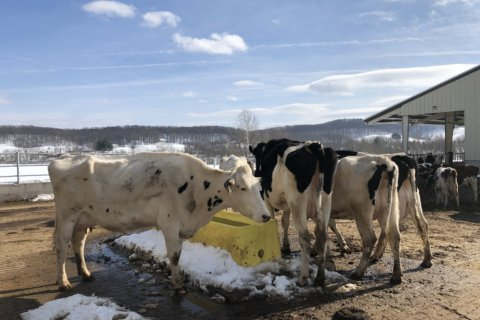 With new creamery, kitchen, Va. vineyard makes more than wine