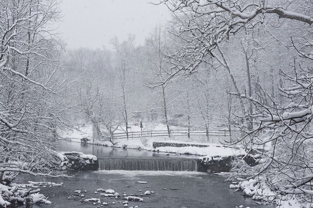 Snow comes down in Rock Creek Park on Sunday. (WTOP/Dave Dildine)