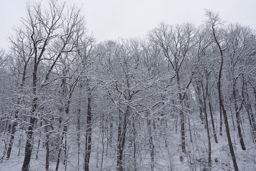 Snow covered trees make a great wintertime image. (WTOP/Dave Dildine)