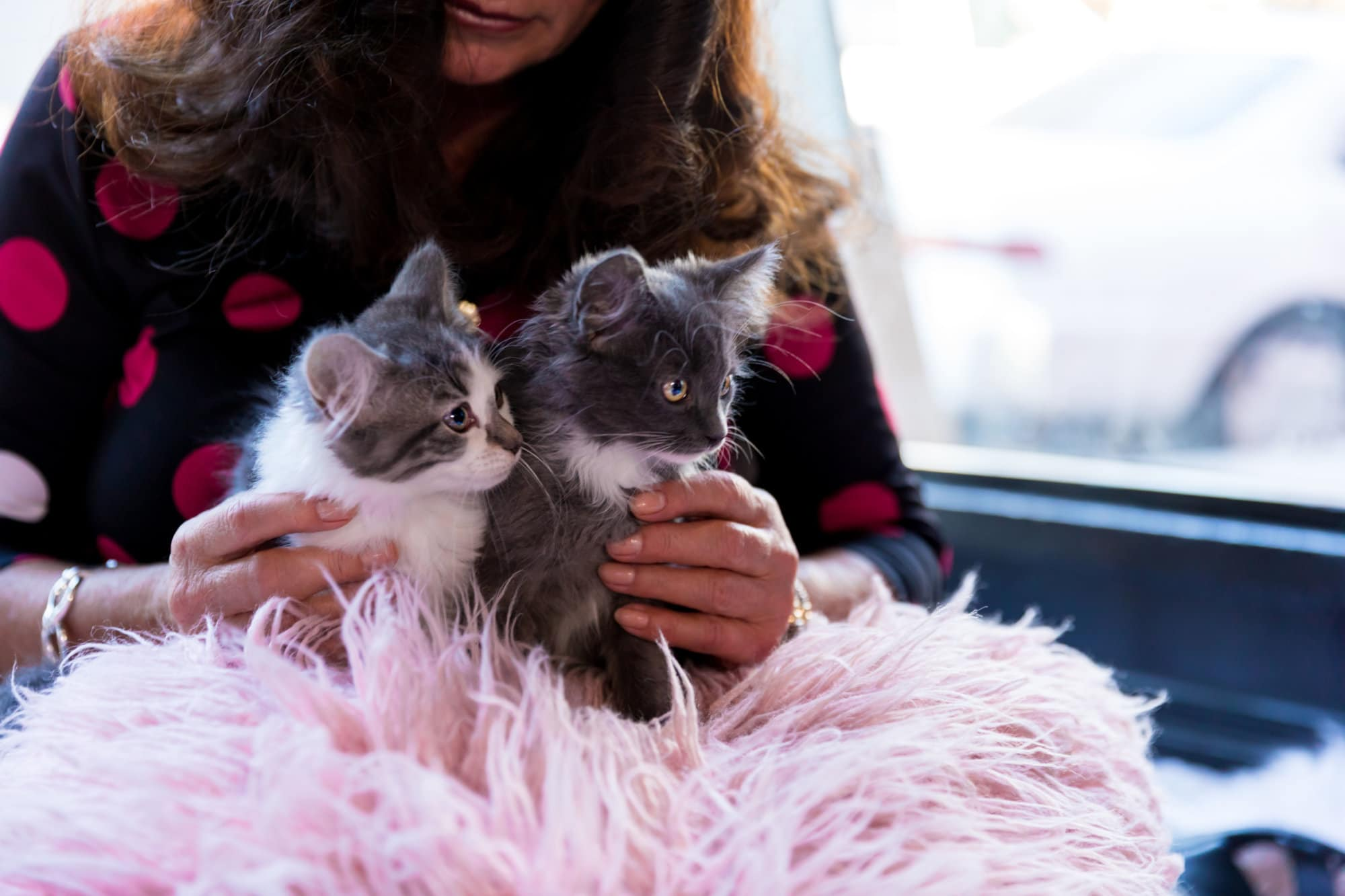 What's being called the first-in-America place to rest, relax and interact with kittens between the ages three-to-six months will open in early March, at 3109 M(eow) Street NW. (Courtesy Crumbs & Whiskers)