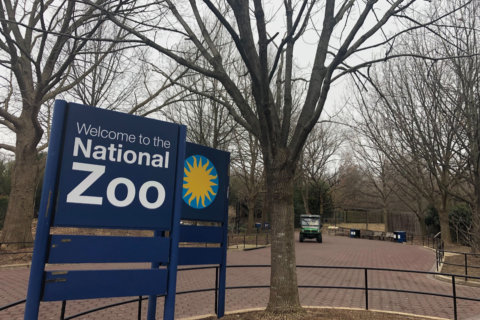 National Zoo reopens, welcoming newborn chicks and otter pups