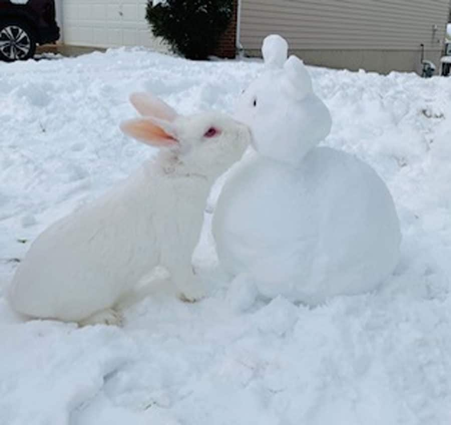 Talk about a snow bunny! (Courtesy Dee D)