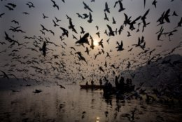 In this Tuesday, Jan. 1, 2019, file photo, Indians feed seagulls from the boat in the river Yamuna on the first day of the new year in New Delhi, India. (AP Photo/Manish Swarup, File)