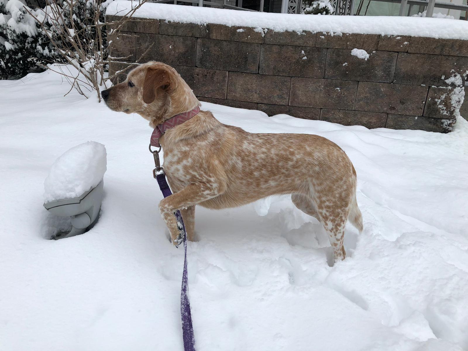 According to WTOP's Carlos Prieto, Abby Prieto is a big fan of the snow. (Courtesy of Olivia Prieto)