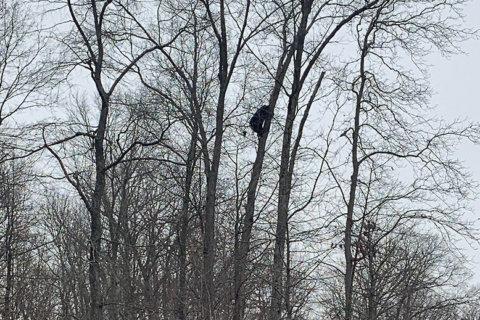 PHOTOS: Black bear spotted climbing tree in Aldie, Va.