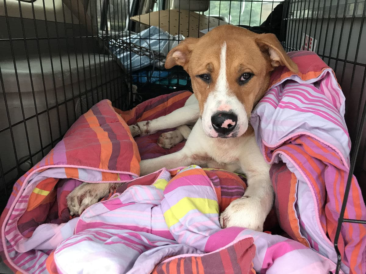 Man faces animal cruelty charges after injured, abandoned
