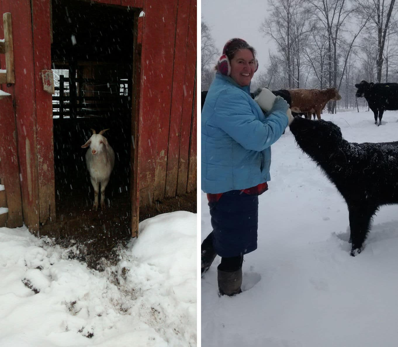 Ben and Sherri Phares share these pictures from their farm in Haymarket, Virginia. (Courtesy Ben and Sherri Phares)