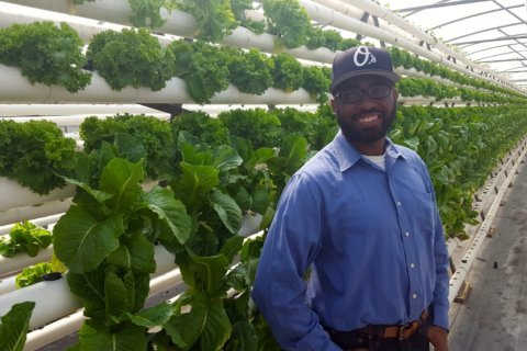 'I wanted to do more for people than just pray': Pastor blends faith, farms to end food insecurity in black churches
