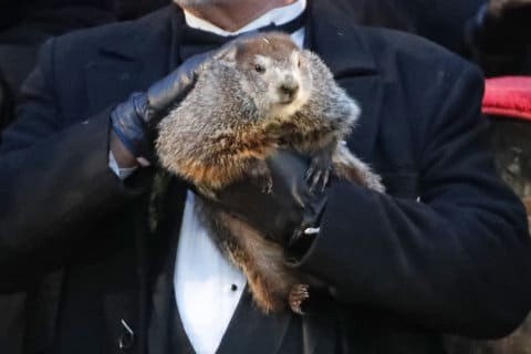 WATCH: Punxsutawney Phil makes his forecast for 2019