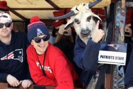 A member of the New England Patriots staff wears a goat mask during a victory parade through downtown Boston, Tuesday, Feb. 5, 2019, to celebrate their win over the Los Angeles Rams in Sunday's NFL Super Bowl 53 football game in Atlanta. The Patriots have won six Super Bowl championships. (AP Photo/Elise Amendola)