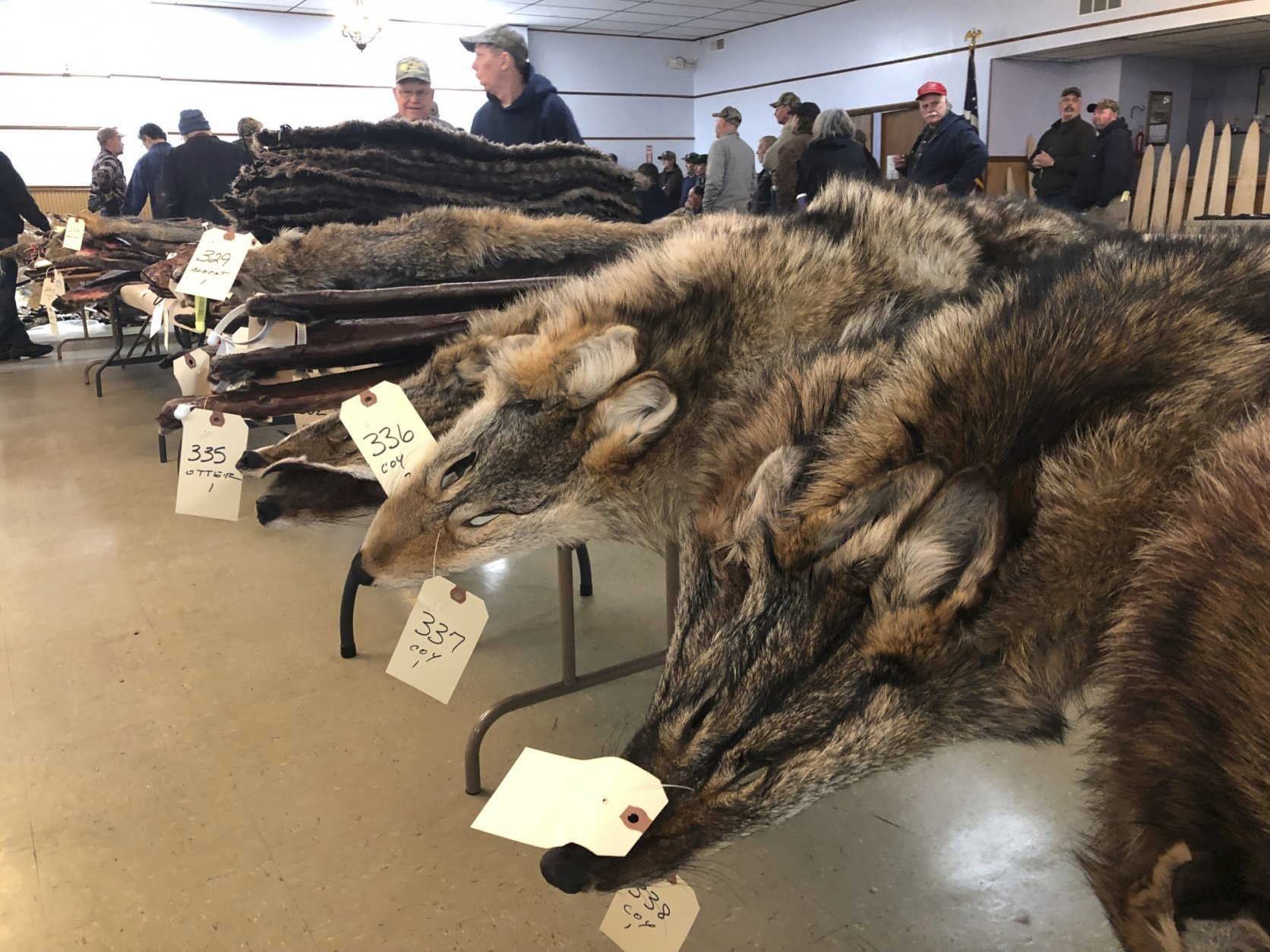 Animal Fur Clithing Porn coyote fur is in big demand thanks to popular parkas | wtop