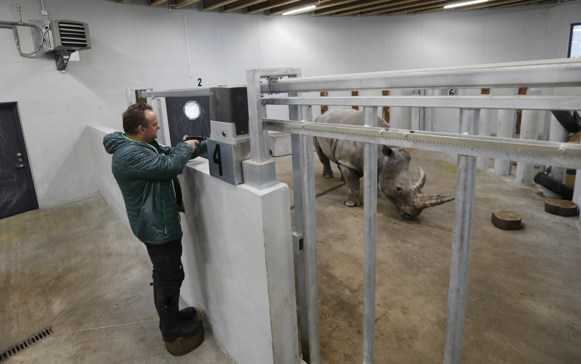 Anesthesiologists Frank Goeritz shoots a tranquilizing dart to sedate female southern white rhino, 17-year-old Hope, so team of experts can harvest its eggs at a zoo park in Chorzow, Poland, Wednesday, Feb. 13, 2019. (AP Photo/Petr David Josek)