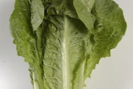 FILE - This undated photo shows romaine lettuce in Houston. On Friday, June 1, 2018, the U.S. Centers for Disease Control and Prevention said it wasn't able to identify a contamination source for an E. coli outbreak that prompted it to warn people to avoid romaine lettuce in the fall of 2018. (Steve Campbell/Houston Chronicle via AP)