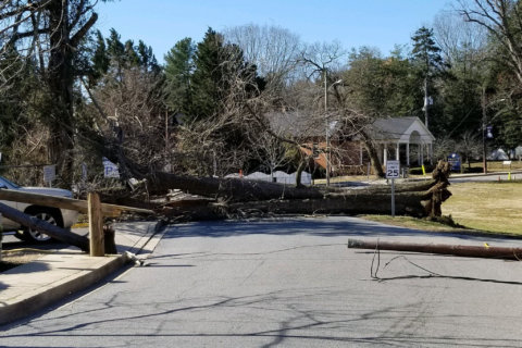 Insurance tips for homeowners when wind topples trees