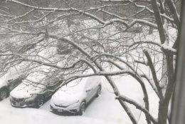 Snow piles up in Alexandria, Virginia, Wednesday morning. (Courtesy @SylvieNFawley via Twitter)