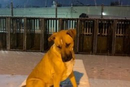 Dogs at the Lost Dog Rescue Kennel in Falls Church. check out the snow Wednesday. (Courtesy Elizabeth Gaffin)