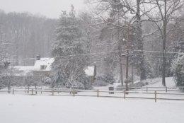 It's a winter wonderland in Falls Church, Virginia. (WTOP/Hillary Howard)