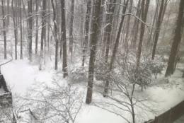 Snow coats a backyard in Garrett Park. (Courtesy Andy Field)