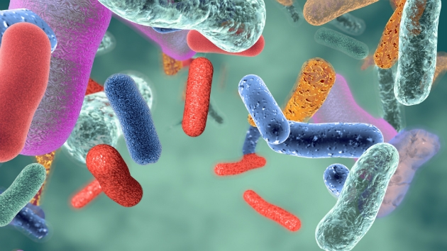 Can Bacteria In Your Gut Explain Your >> How The Bacteria In Your Gut Affect Your Mind And Body Wtop