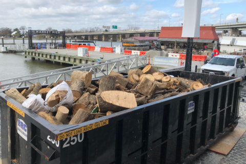 Canoe-sized logs among debris being removed from channel on Southwest Waterfront