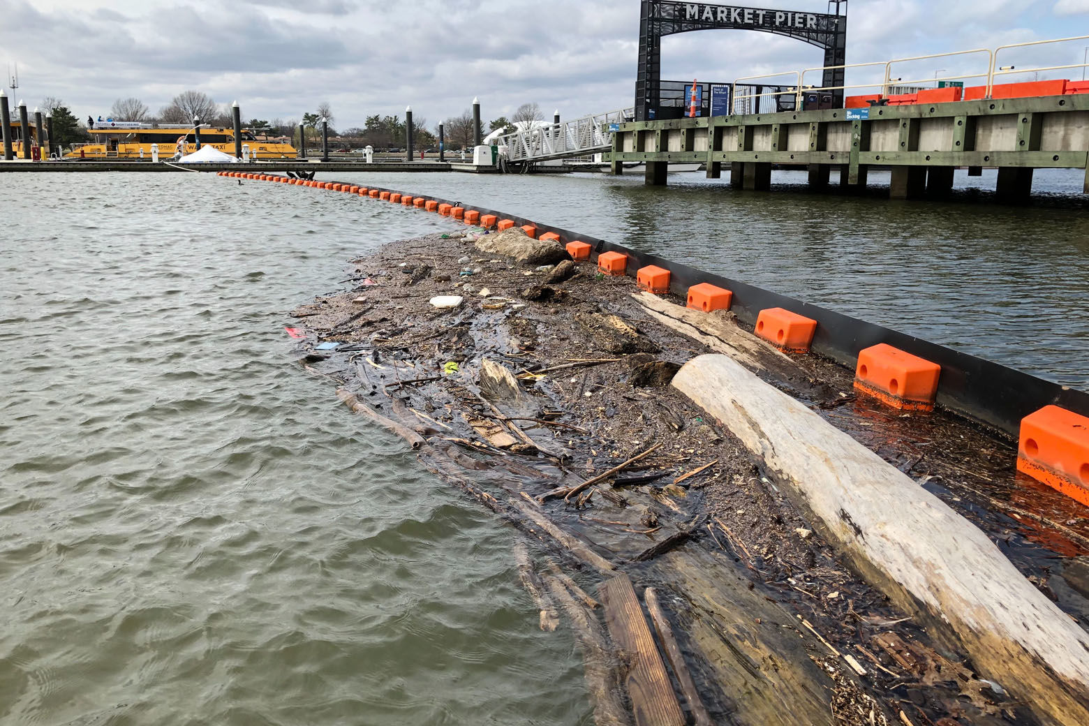 A year's worth of record rainfall has helped push generous amounts of trash, debris and wood of various sizes downstream and into area waterways. (WTOP/Kristi King)