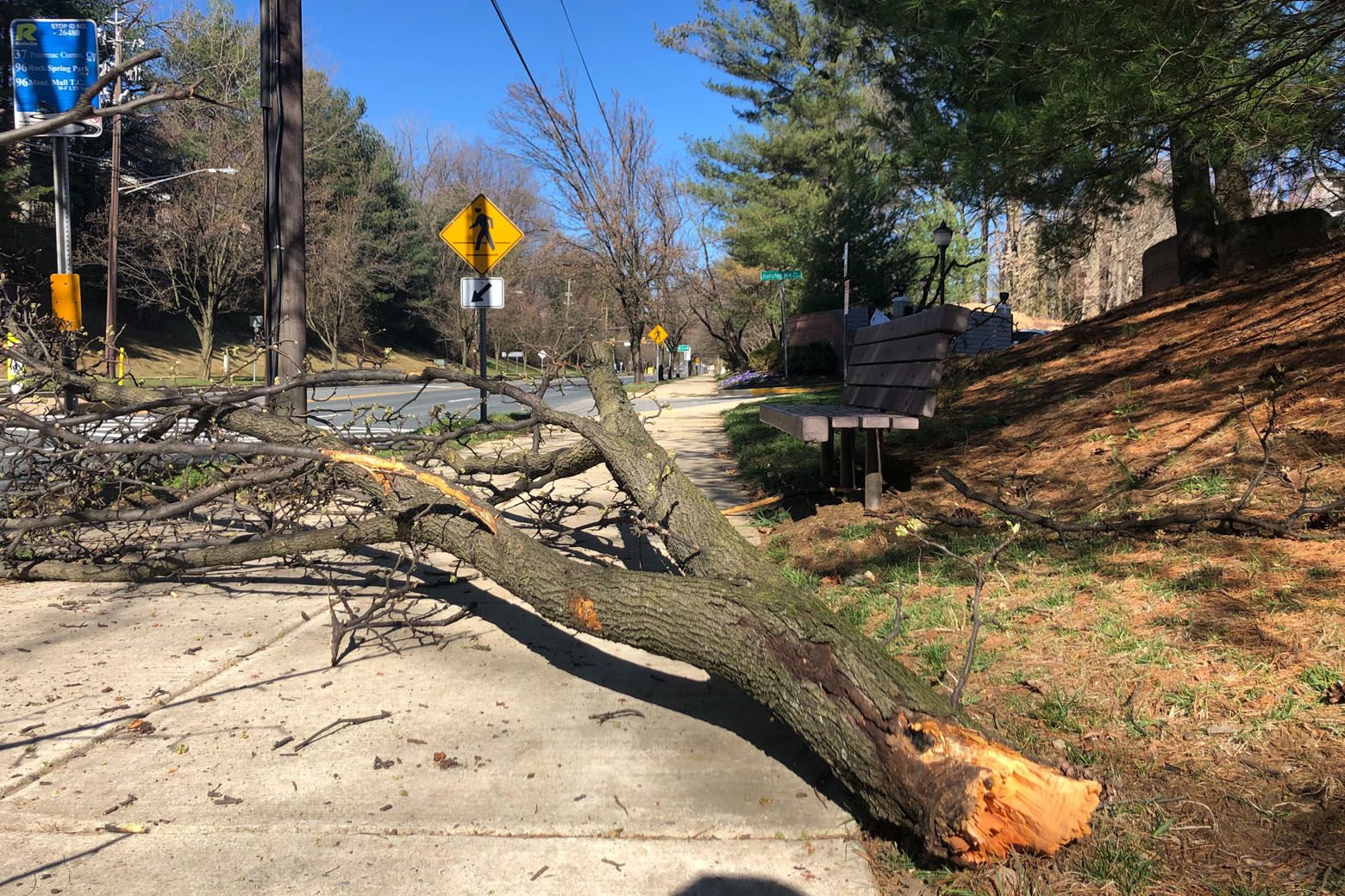 A person walking in North Bethesda, Maryland, was seriously injured Tuesday morning by a falling tree branch. (WTOP/Melissa Howell)
