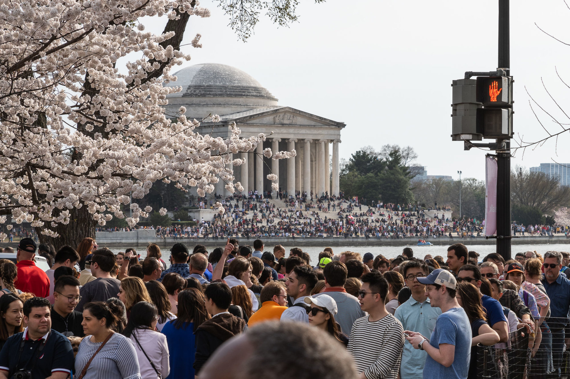 The Jefferson Memorial is seen from the eastern shore of the Tidal Basin on March 30. Though not the only place to take in the blossoms, the Tidal Basin is by far the most popular — and with excellent weather on Sunday evening, parts of the area were standing room only. (WTOP/Alejandro Alvarez)
