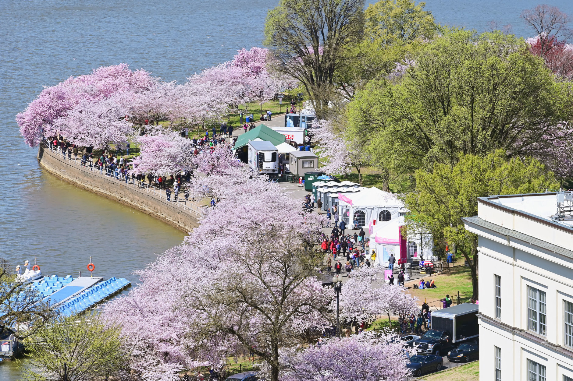 Tourists take in the peak bloom of cherry blossoms Monday afternoon around the Jefferson Memorial. (Courtesy Shannon Finney)