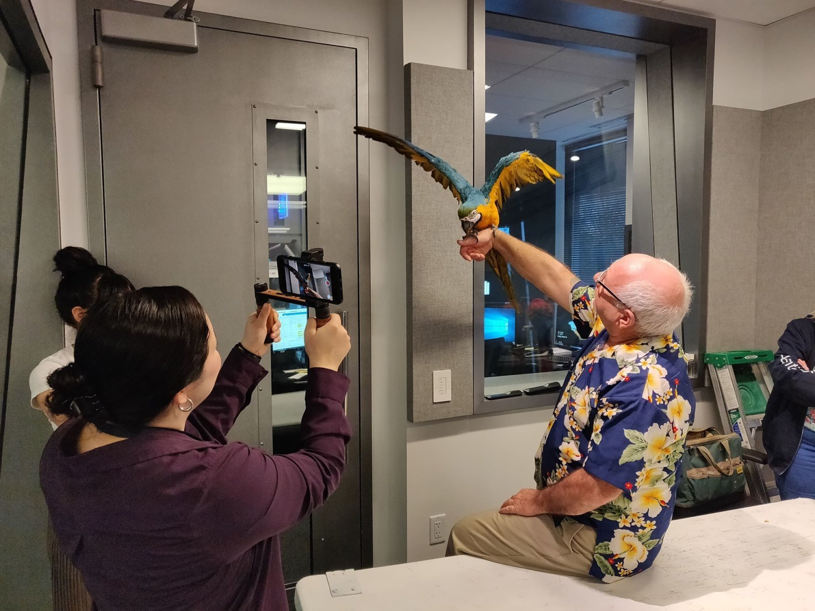 Polly the parrot flaps her wings in Studio B with New Jersey Birdman Bill Middleton while talking with WTOP's Ginger Whitaker and NNahal Amouzadeh. (WTOP/Mike McMearty)