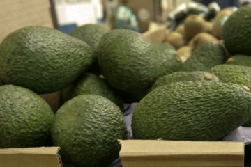 Holy guacamole! Thousands of avocados spilled on Texas highway